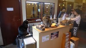 Neko cafe Ikebukuro http://www.pottwalblog.ch/2012/05/neko-cafe-herumhangen-mit-katzen/