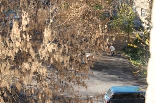 Tachkent: journée de service communautaire des élèves - armé d'un balai, on pousse les feuilles !