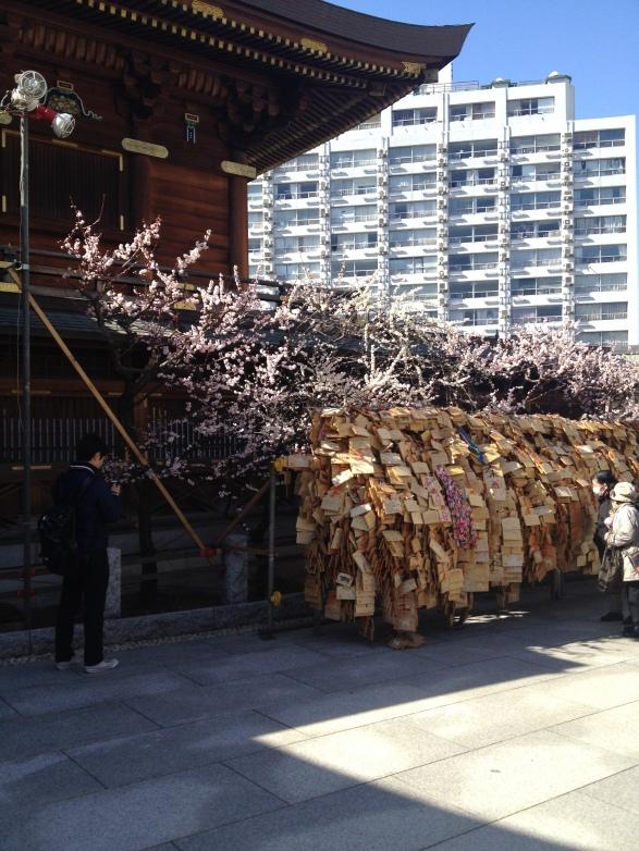 Fleurs de plum tree et les myriades de carte de souhait