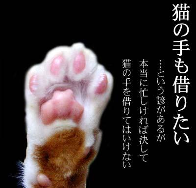source: http://nekojiten.com/kotowaza/neko/neknote.html
